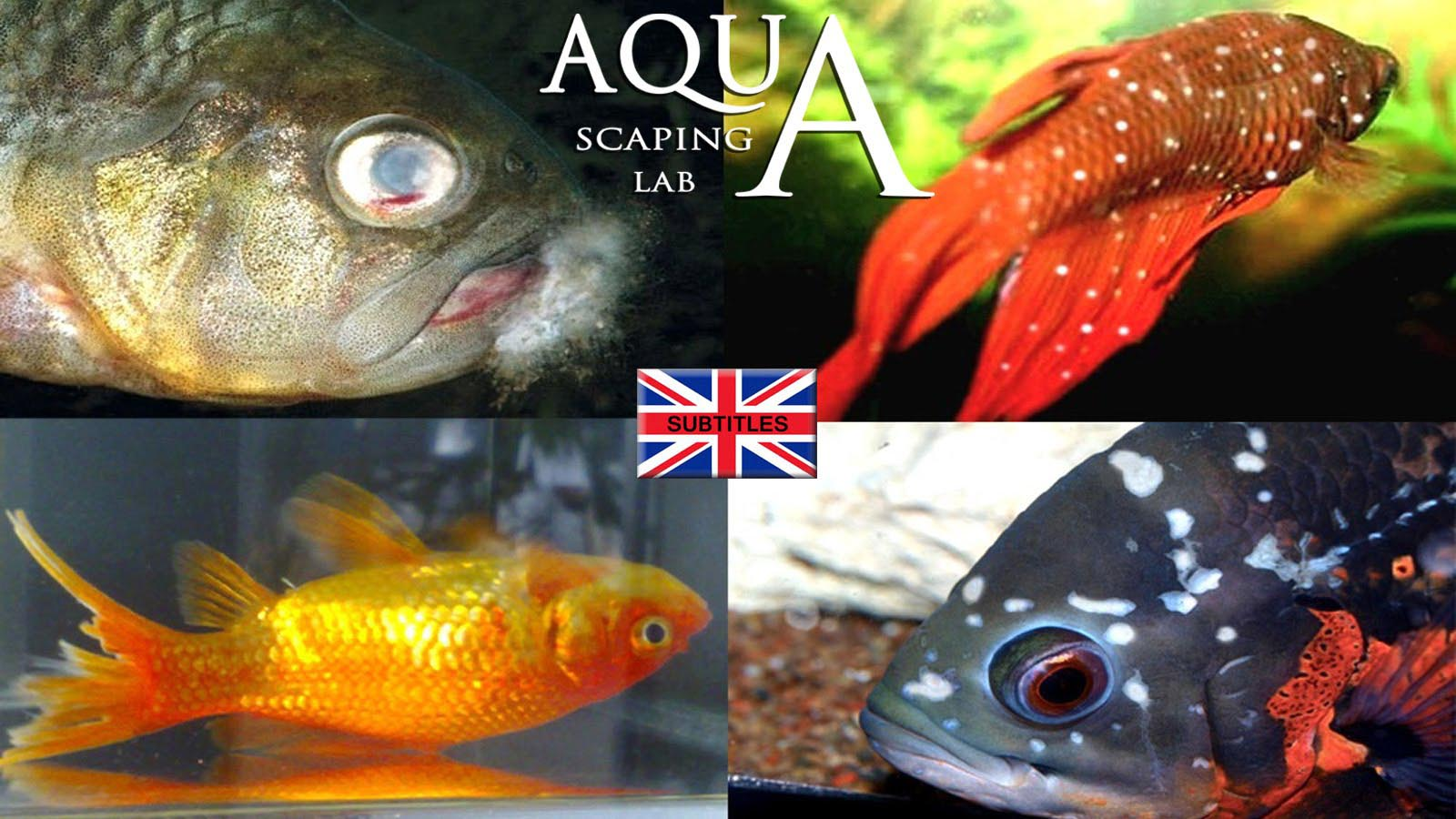 Saltwater Aquarium Fish Diseases and Treatments