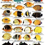Saltwater Aquarium Fish Guide