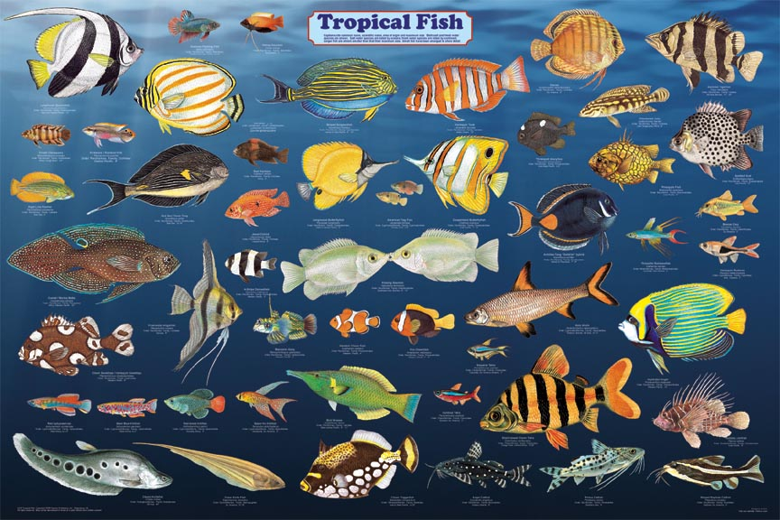 aquarium fish names with pictures pdf