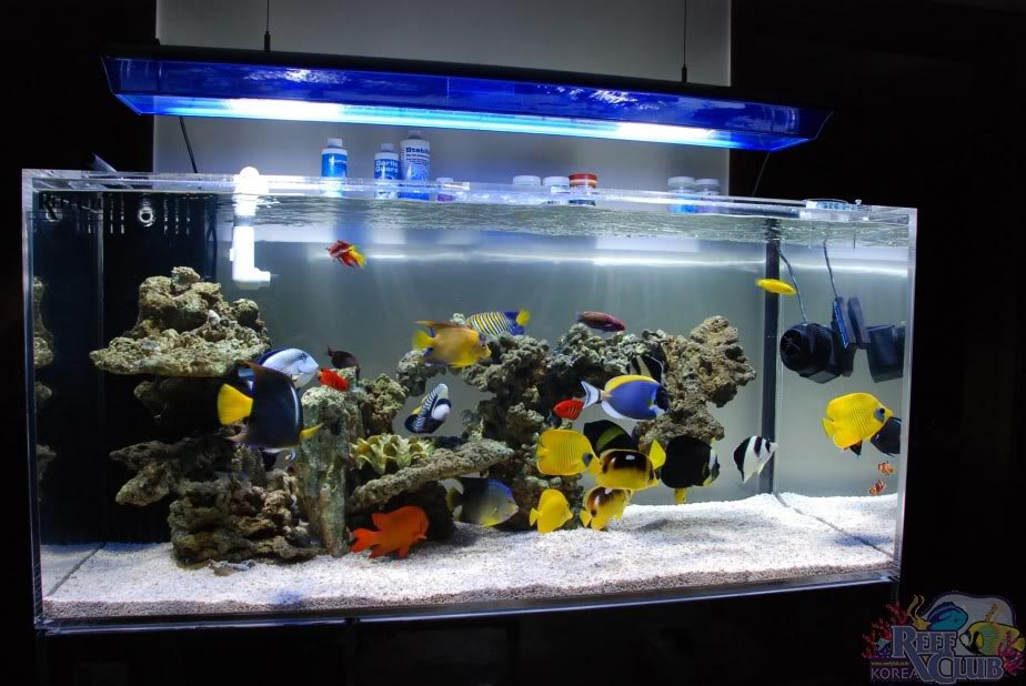 Saltwater Aquarium Fish Only