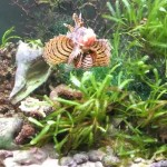 Saltwater Aquarium Live Plants