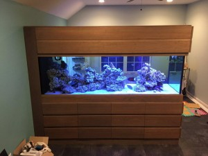 Saltwater Aquarium Salt to Water Ratio