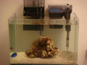Saltwater Aquarium Starter Fish