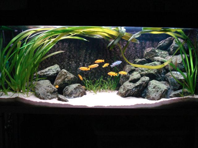 Saltwater Fish Aquarium for Beginners