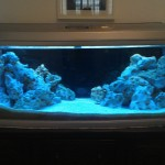 Saltwater Fish Aquarium Setup