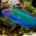 Saltwater Fish List for Aquariums