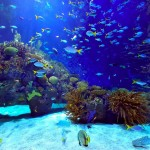Saltwater Marine Aquarium Fish