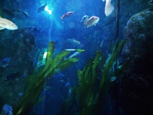 Sea Life Plants Live Lily Aquarium Bulbs