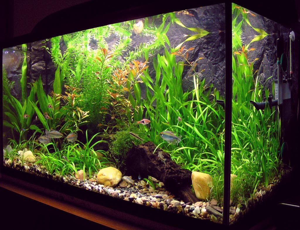 Setting Up an Aquarium for Tropical Fish