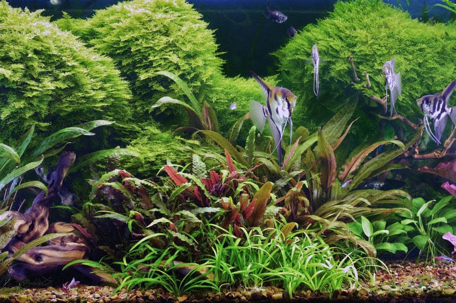 Setting Up an Aquarium with Live Plants
