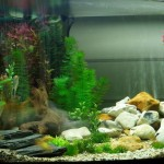 Setting Up Freshwater Aquarium Live Plants
