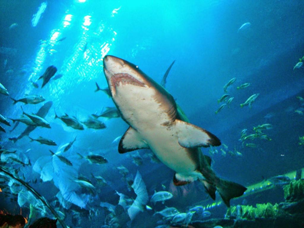 Sharjah Fish Aquarium Timings