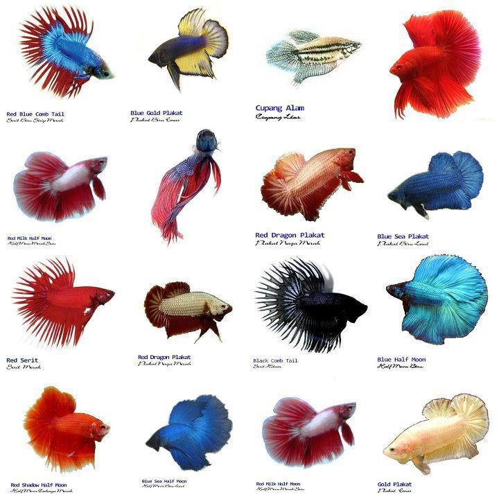 Small Aquarium Fish List Aquarium Design Ideas
