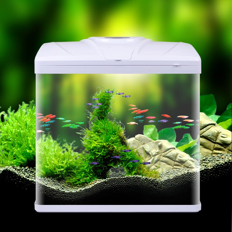 Small Aquarium Fish Tank