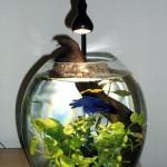 Small Aquarium Heater Betta Fish
