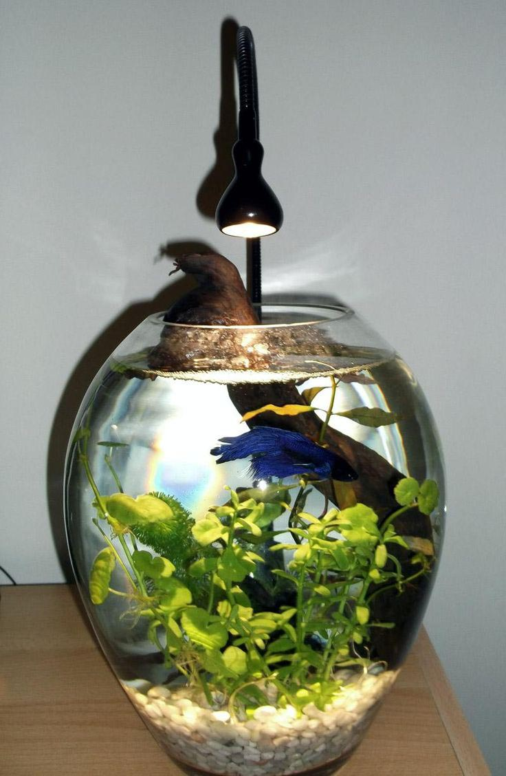 small aquarium heater betta fish aquarium design ideas. Black Bedroom Furniture Sets. Home Design Ideas