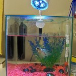 Small Aquarium Heaters Betta Fish