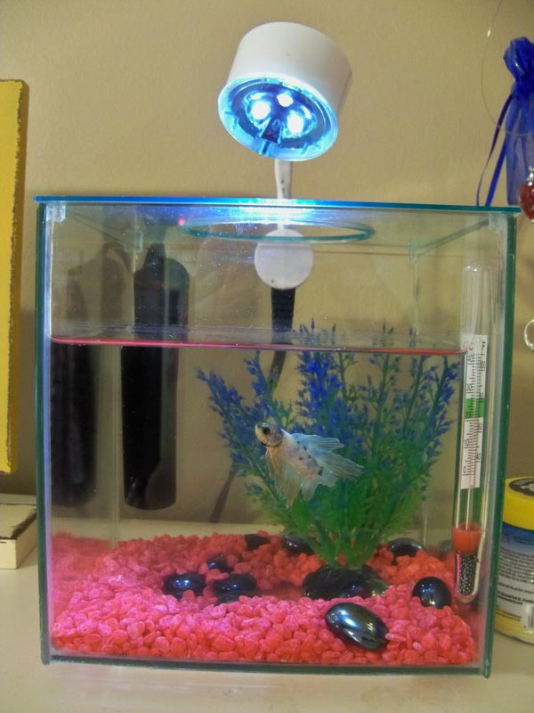 Small aquarium heaters betta fish aquarium design ideas for Small fish tank