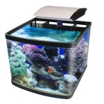 Small Aquarium Saltwater Fish