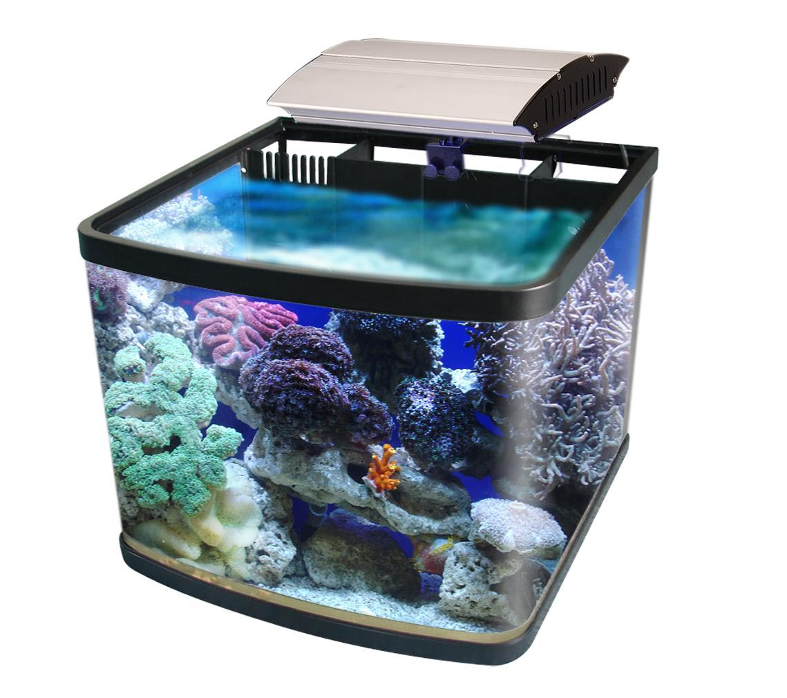 Small aquarium saltwater fish aquarium design ideas for Good fish for small tanks