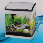 Small Aquarium Tropical Fish