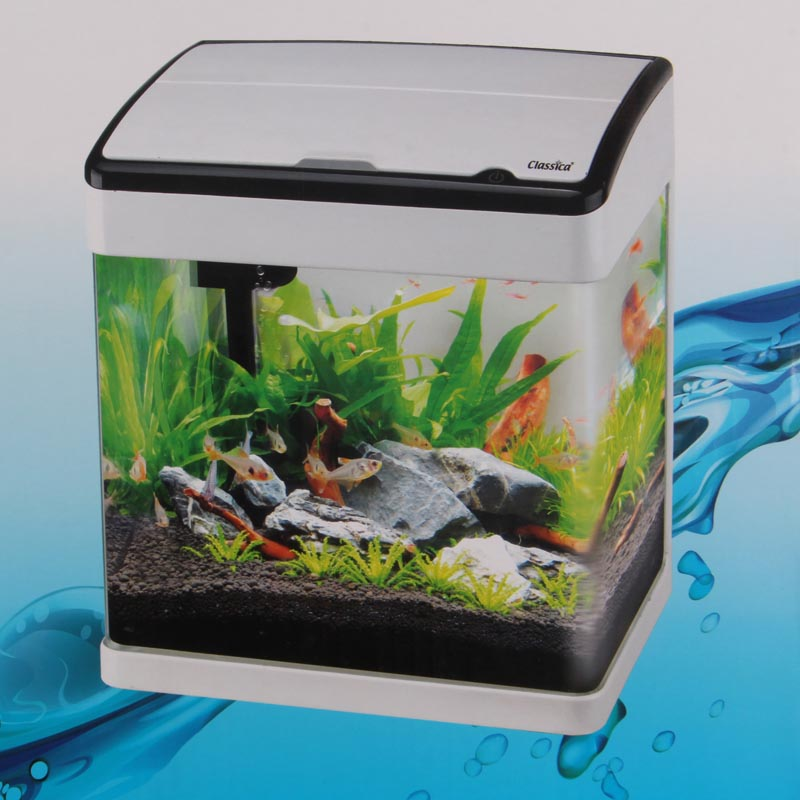 small tropical aquarium fish