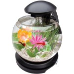 Small Bowl Aquarium Fish