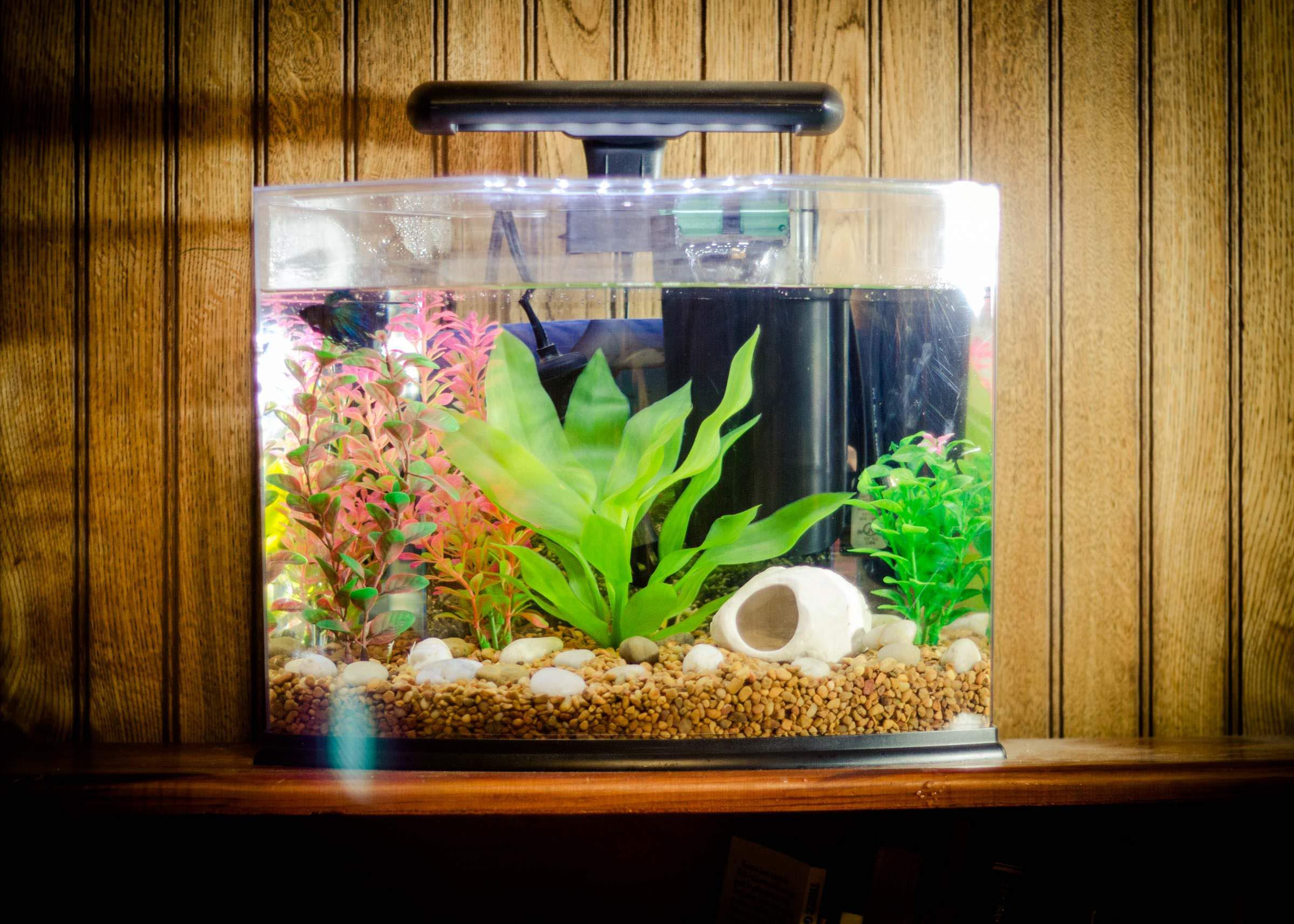 Small fish aquarium ideas aquarium design ideas for Aquarium house decoration