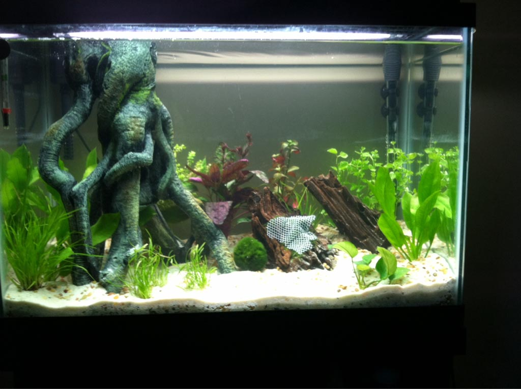 Small Fish Aquarium Setup