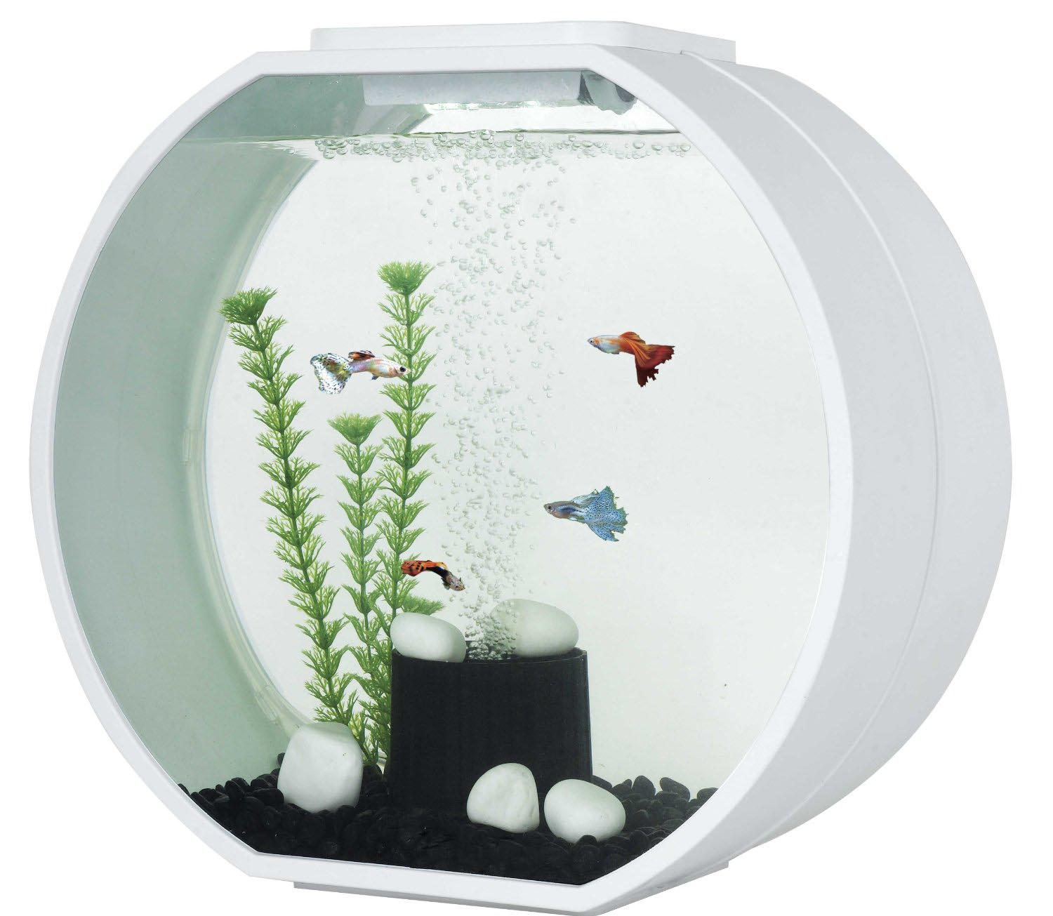 Small fish aquarium tanks aquarium design ideas for Filtre aquarium rond