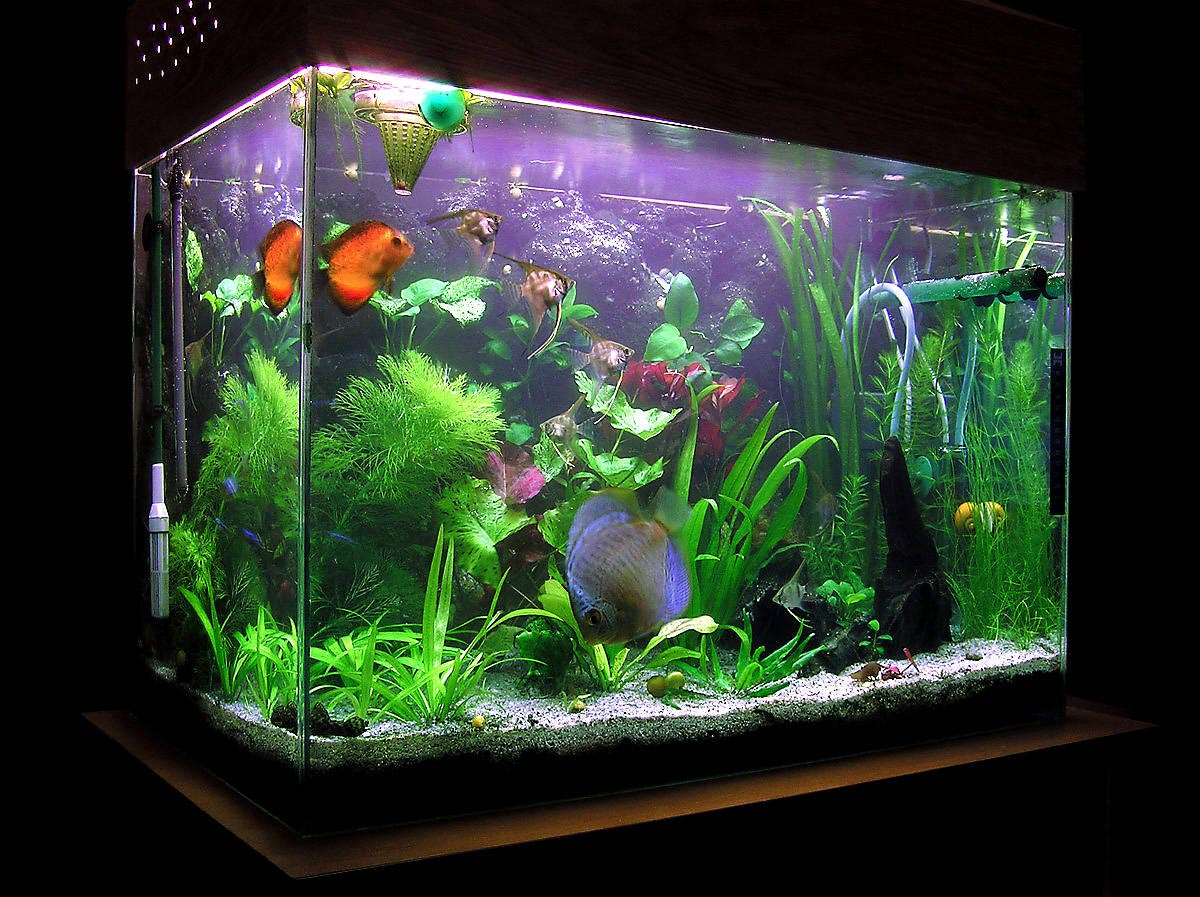 Small freshwater fish aquarium aquarium design ideas for Small tropical fish