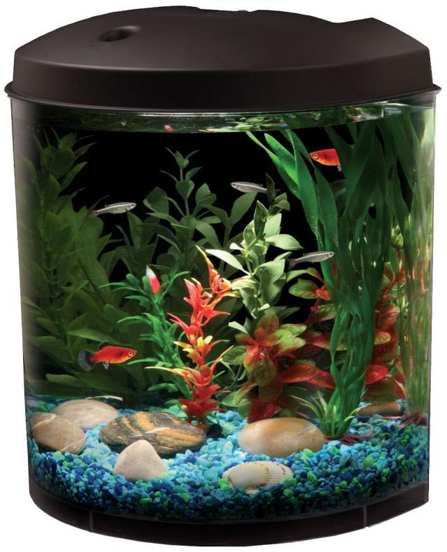 Small Freshwater Fish for Aquariums