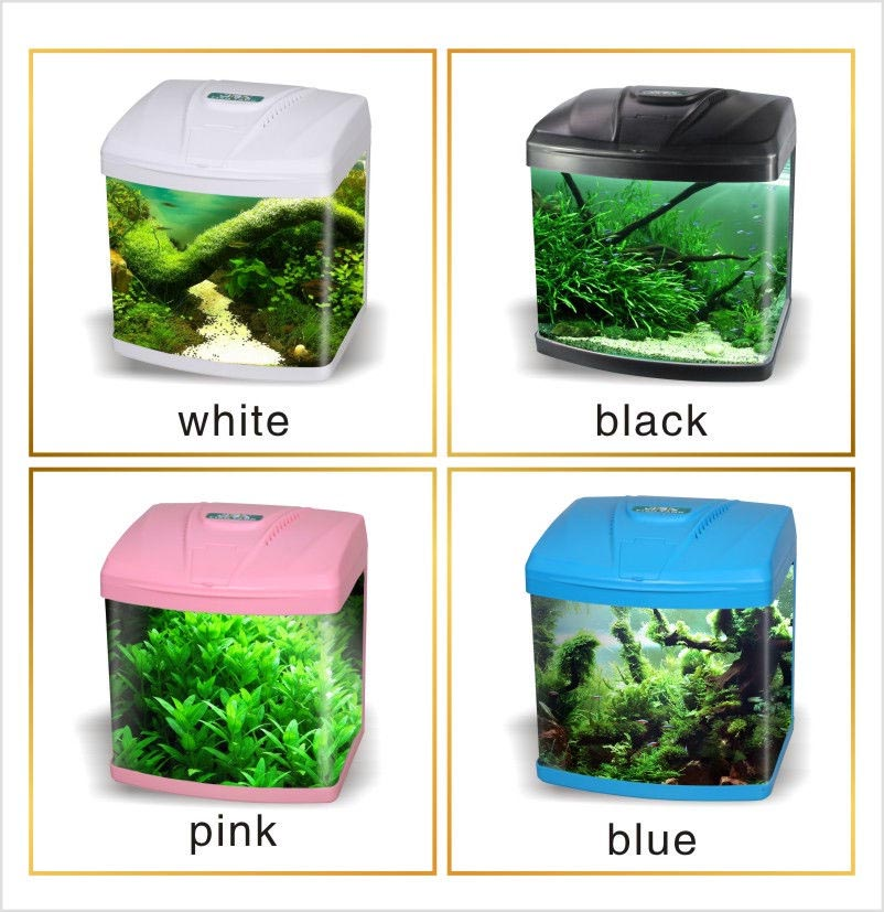 Small Home Aquarium Fish