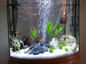 Small Live Aquarium Plants