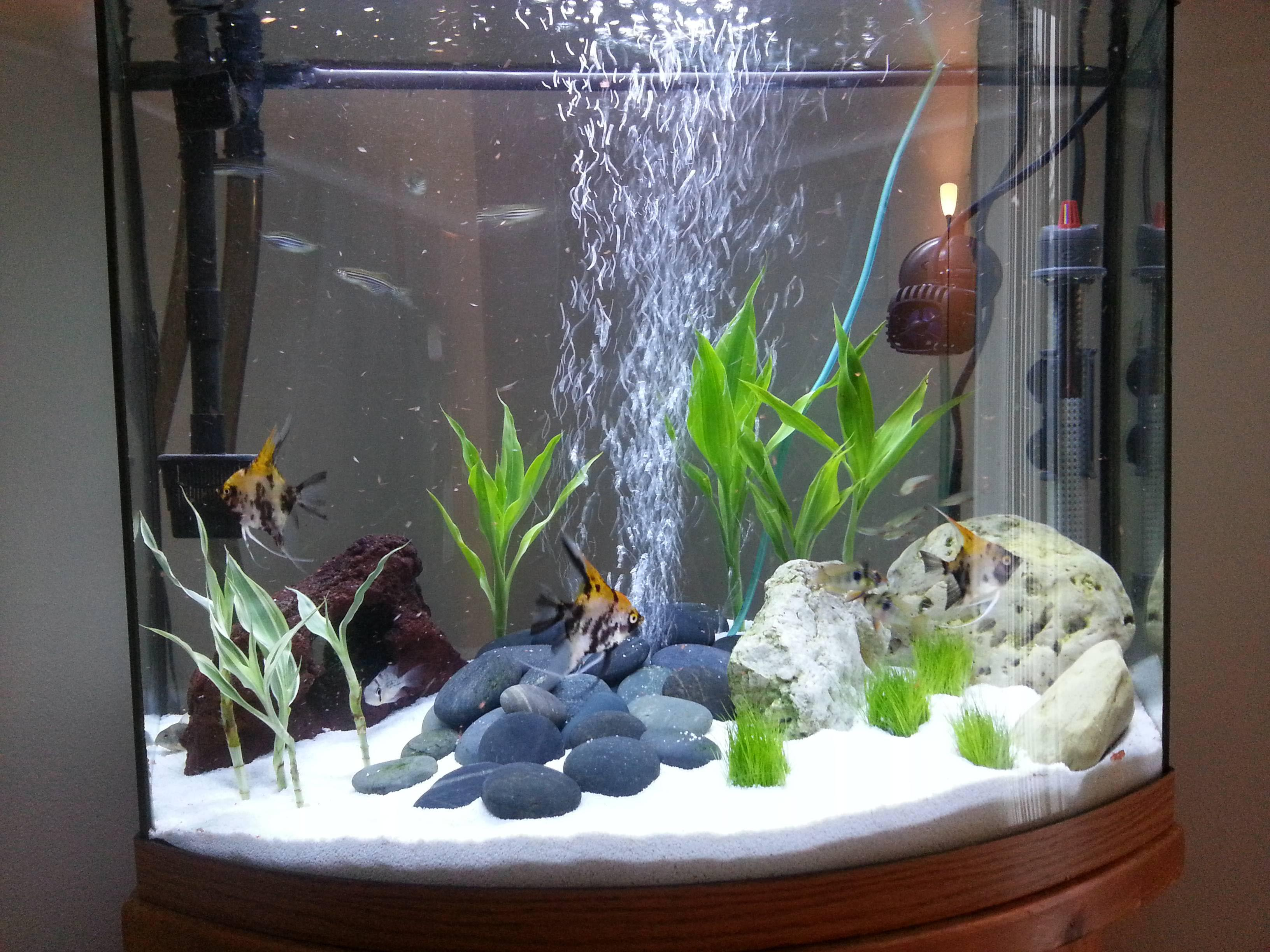 small live aquarium plants aquarium design ideas