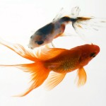 Small Aquarium Heaters Betta Fish Aquarium Design Ideas