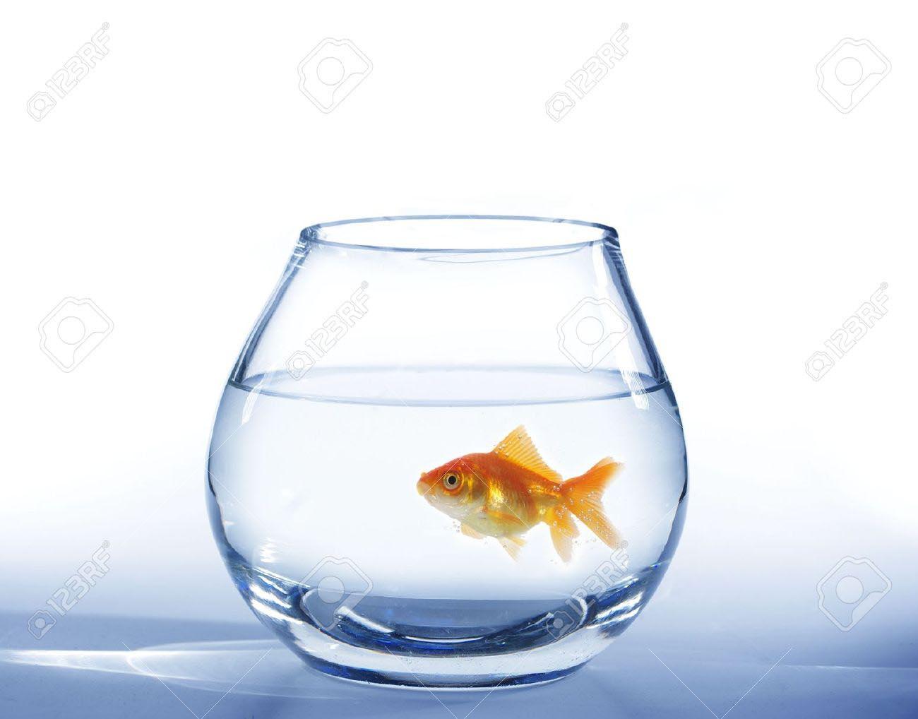 Small Round Fish Aquarium