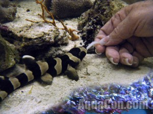 Small Saltwater Aquarium Fish