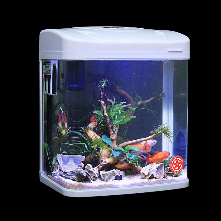 Small Tropical Fish Aquarium