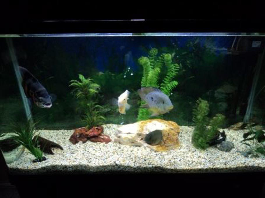 south american freshwater aquarium fish aquarium design ideas