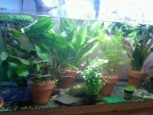 Tall Live Aquarium Plants