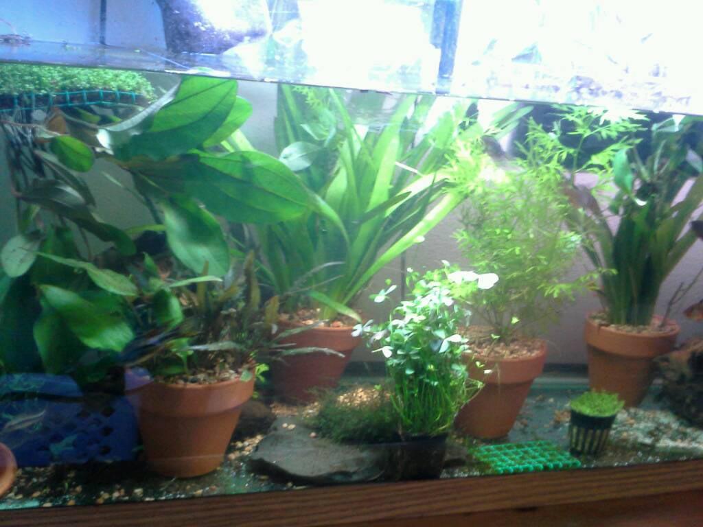 Tall Live Aquarium Plants