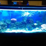 Test Salt Water Aquarium