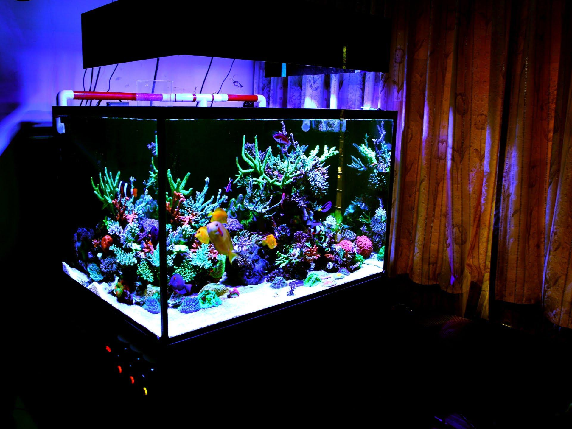 The Coral Reef Aquarium from Inception to Completion