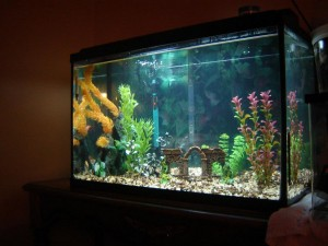 Top Fin Glass Aquarium