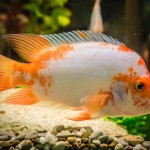 Tropical Aquarium Fish Diseases