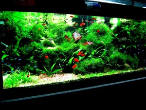 Tropical Aquarium Fish Tank