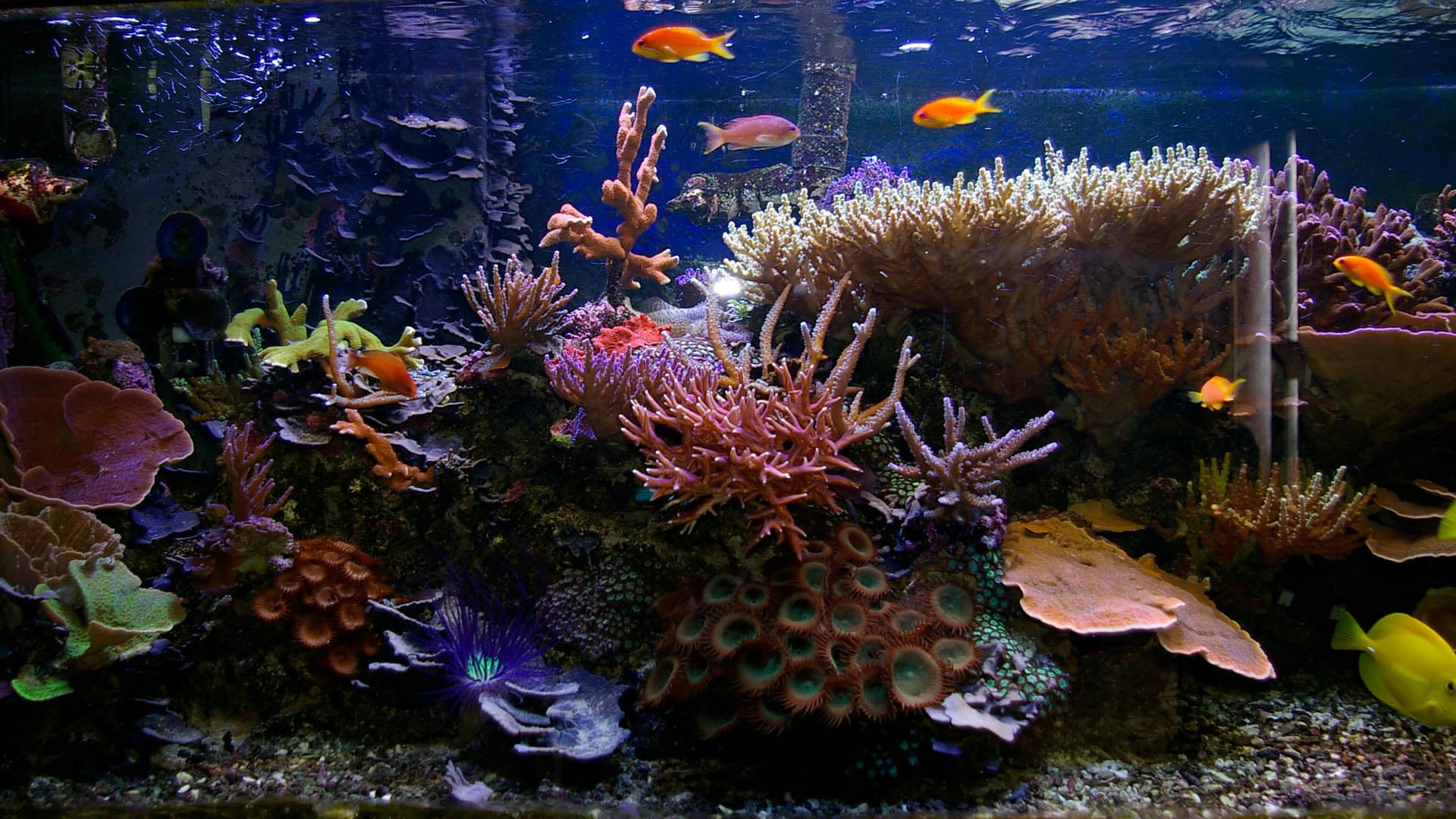 Tropical Fish and Aquariums