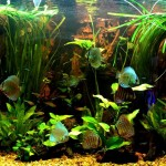Tropical Fish Aquarium Decorations