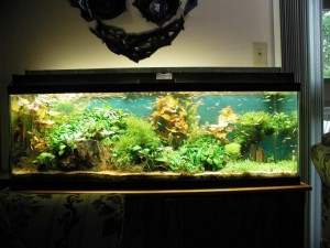 Tropical Fish Decorations for Aquariums